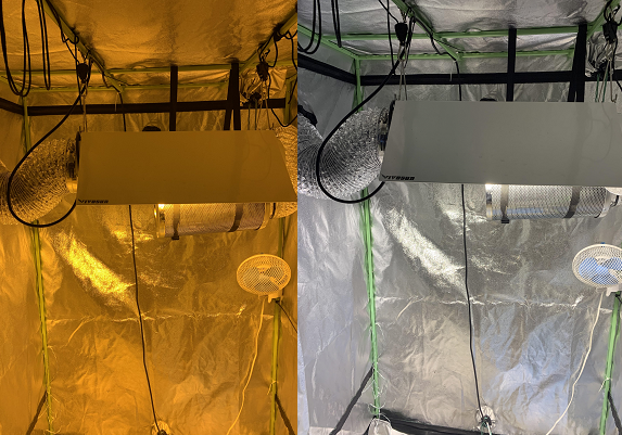 Comparing the light difference between two grow tents.